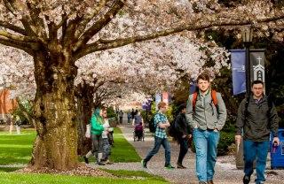 students-quad-spring-opt